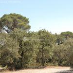 Foto Monte de El Pardo 13