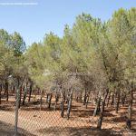 Foto Monte de El Pardo 17