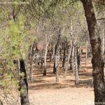 Foto Monte de El Pardo 19