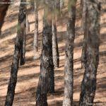 Foto Monte de El Pardo 20