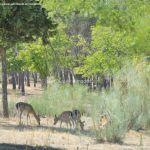 Foto Monte de El Pardo 35