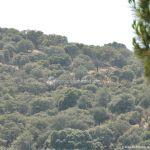 Foto Monte de El Pardo 40