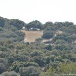 Foto Monte de El Pardo 41