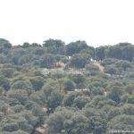 Foto Monte de El Pardo 42