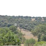 Foto Monte de El Pardo 43