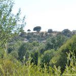 Foto Monte de El Pardo 54