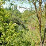 Foto Río Manzanares en el Monte de El Pardo 3