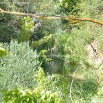 Foto Río Manzanares en el Monte de El Pardo 4