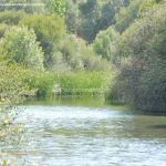 Foto Río Manzanares en el Monte de El Pardo 13