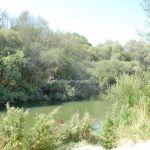 Foto Río Manzanares en el Monte de El Pardo 18