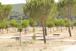 Foto Área Recreativa en el Monte de El Pardo 3