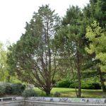 Foto Parque Avenida de España de Coslada 9
