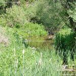 Foto Río Guadalix de San Agustin del Guadalix 2