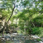 Foto Río Guadalix de San Agustin del Guadalix 4