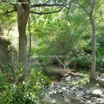 Foto Río Guadalix de San Agustin del Guadalix 10