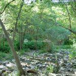 Foto Río Guadalix de San Agustin del Guadalix 11