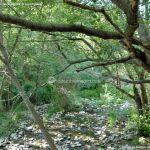 Foto Río Guadalix de San Agustin del Guadalix 12