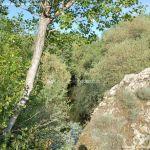 Foto Entorno del Puente Romano 12