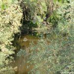 Foto Entorno del Puente Romano 14
