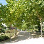 Foto Parque de Asturias 16