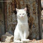 Foto Gatos en Robledondo 1