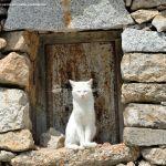 Foto Gatos en Robledondo 2