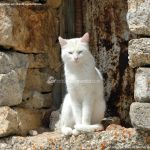 Foto Gatos en Robledondo 3