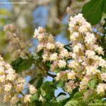 Foto Árboles floreciendo en Santa María de la Alameda 5