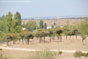 Foto Parque Central de Tres Cantos 5