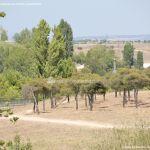 Foto Parque Central de Tres Cantos 6