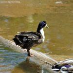 Foto Lago en Parque El Castillo 10