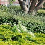 Foto Parque de las Comunidades de Alcorcon 9