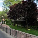 Foto Avenida Juan XXIII 4