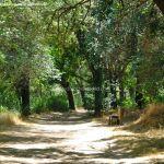 Foto Corredor Ecofluvial del río Henares 9