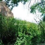 Foto Corredor Ecofluvial del río Henares 10