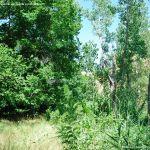 Foto Corredor Ecofluvial del río Henares 12