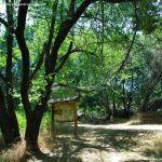 Foto Corredor Ecofluvial del río Henares 13