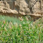 Foto Corredor Ecofluvial del río Henares 16