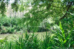 Foto Corredor Ecofluvial del río Henares 18