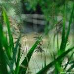 Foto Corredor Ecofluvial del río Henares 19