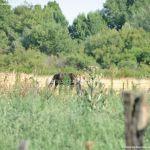Foto Caballos junto al Río 3