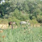 Foto Caballos junto al Río 7