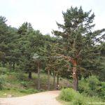 Foto Parque Regional de la Cuenca Alta del Manzanares 8