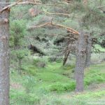 Foto Parque Regional de la Cuenca Alta del Manzanares 47