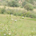 Foto Parque Regional de la Cuenca Alta del Manzanares 79