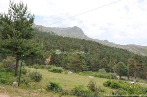 Foto Parque de Aventuras de Pino a Pino 11
