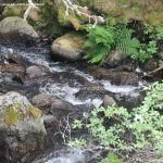 Foto Río en La Barranca 4