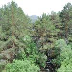Foto Río en La Barranca 5