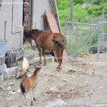 Foto Caballos en el Alto del León 2