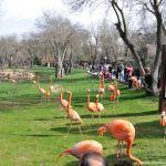 Foto Zoo Acuarium de Madrid 3
